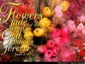 Never Fading (Isaiah 40:8)