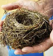 The Empty Nest?