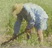 Relationship Gardening