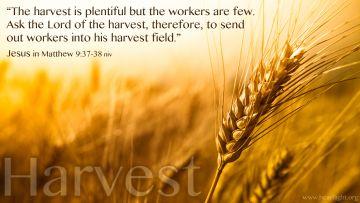 PowerPoint Background: Matthew 9:37-38 Text