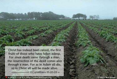 Illustration of the Bible Verse 1 Corinthians 15:20-22