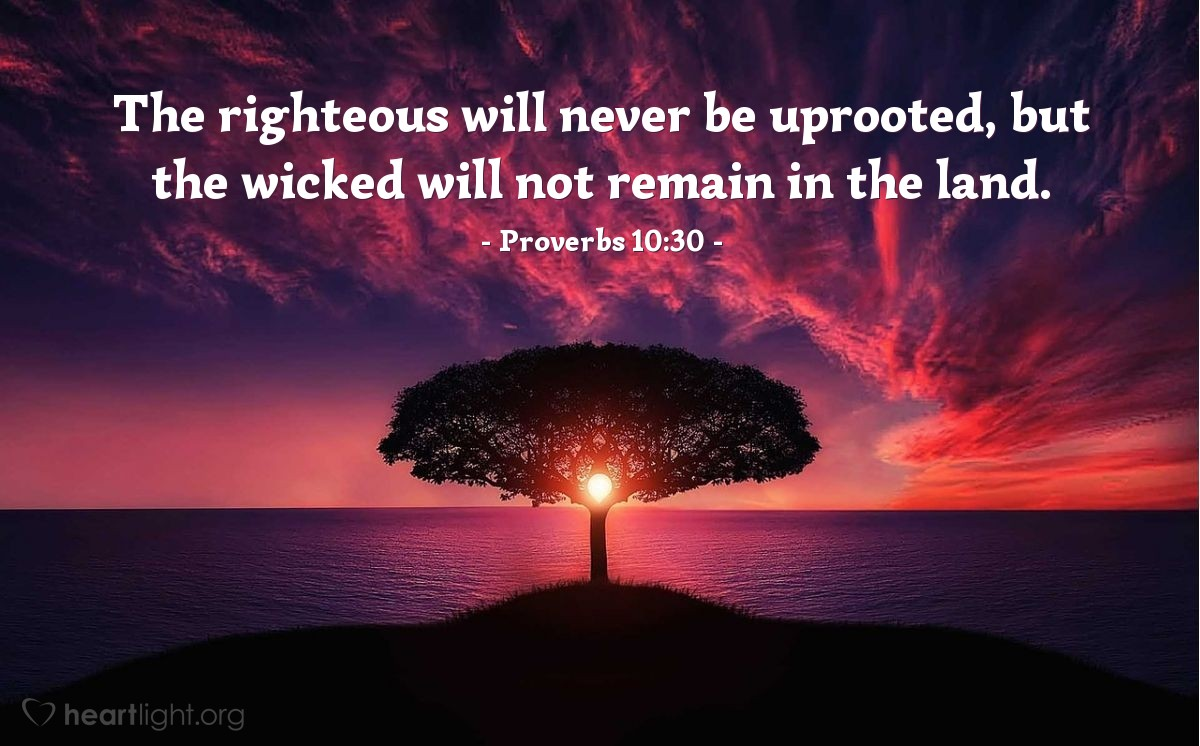 Illustration of Proverbs 10:30 — The righteous will never be uprooted, but the wicked will not remain in the land.