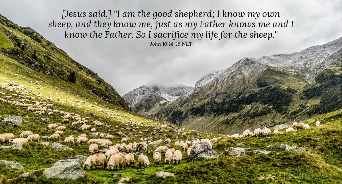 """Illustration of John 10:14-15 — """"I am the shepherd that cares for the sheep (people). I know my sheep like the Father knows me. And my sheep know me like I know the Father. I give my life for these sheep."""""""