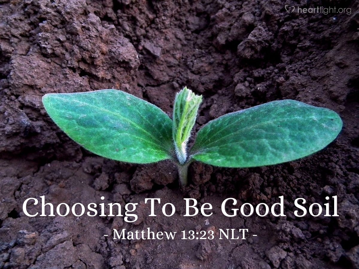 """Illustration of Matthew 13:23 — """"But what is the seed that fell on the good ground?"""