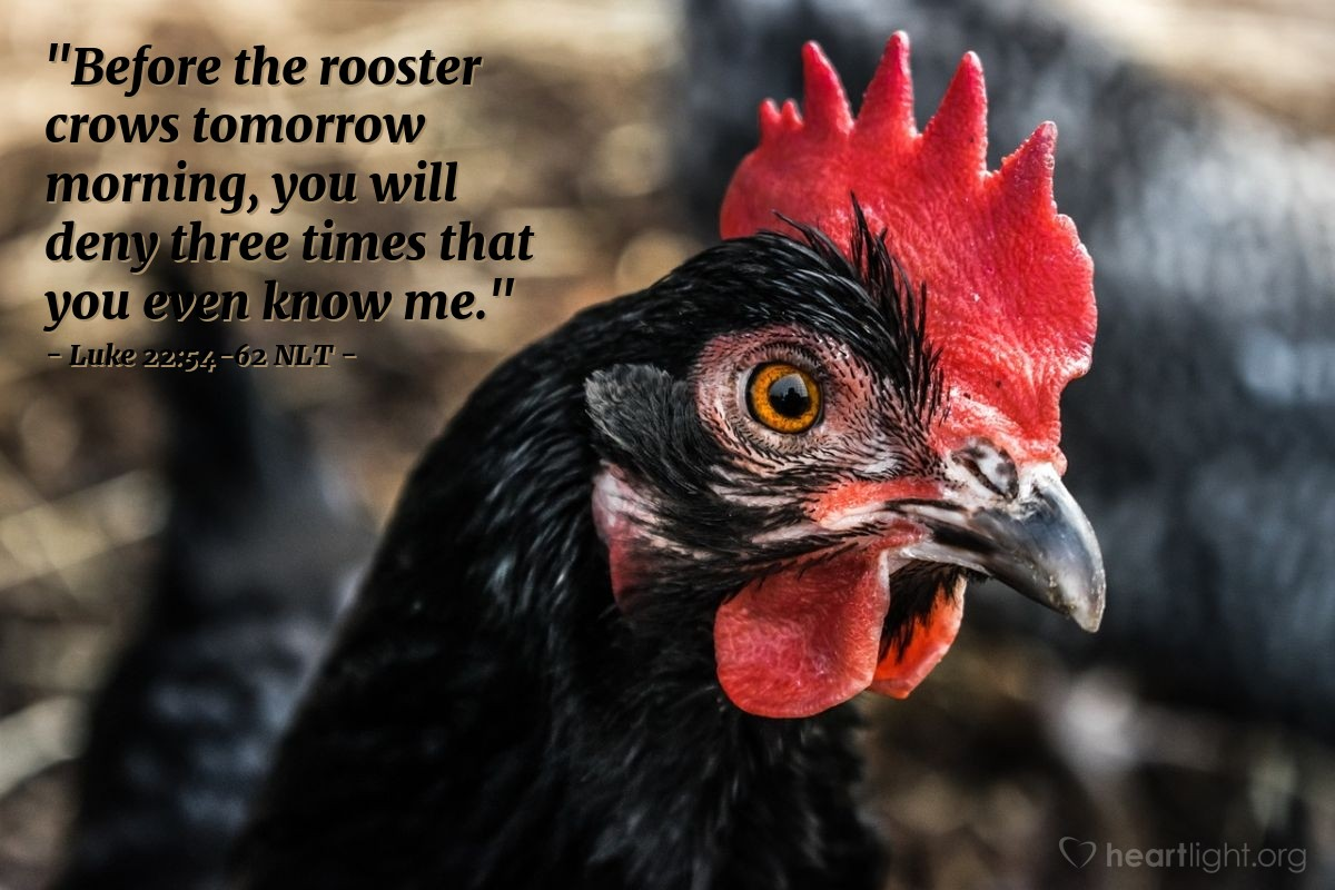 "Illustration of Luke 22:54-62 — ""Before the rooster crows in the morning, you will say three times that you don't know me."""