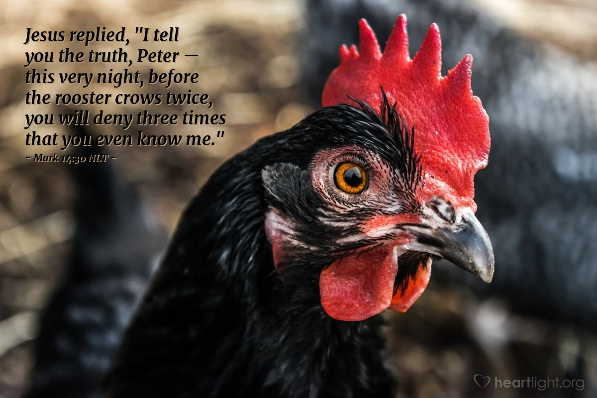 """Illustration of Mark 14:30 — Jesus answered, """"I tell you the truth. Tonight you will say you don't know me. You will say this three times before the rooster crows twice."""""""
