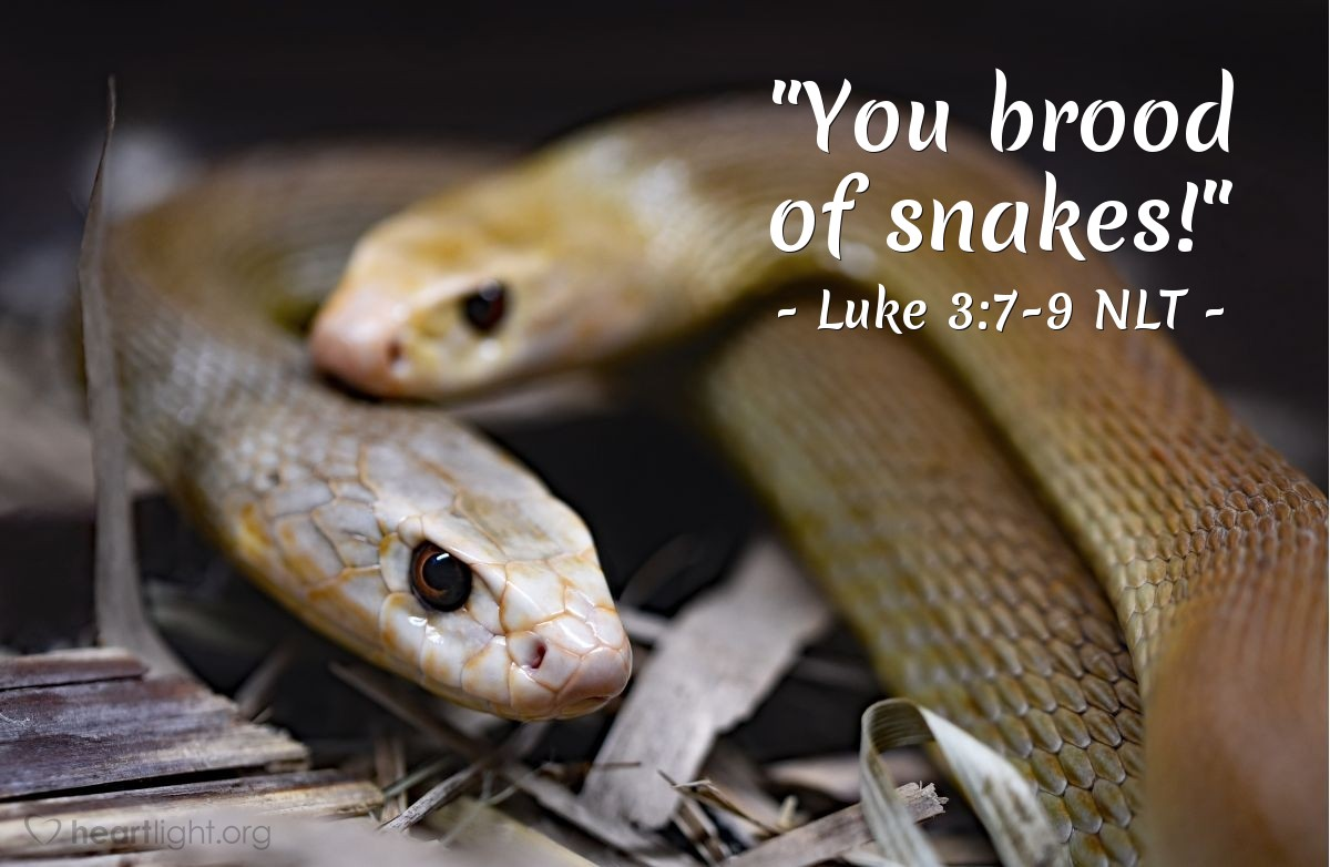 "Illustration of Luke 3:7-9 — ""You are like poisonous snakes!"""