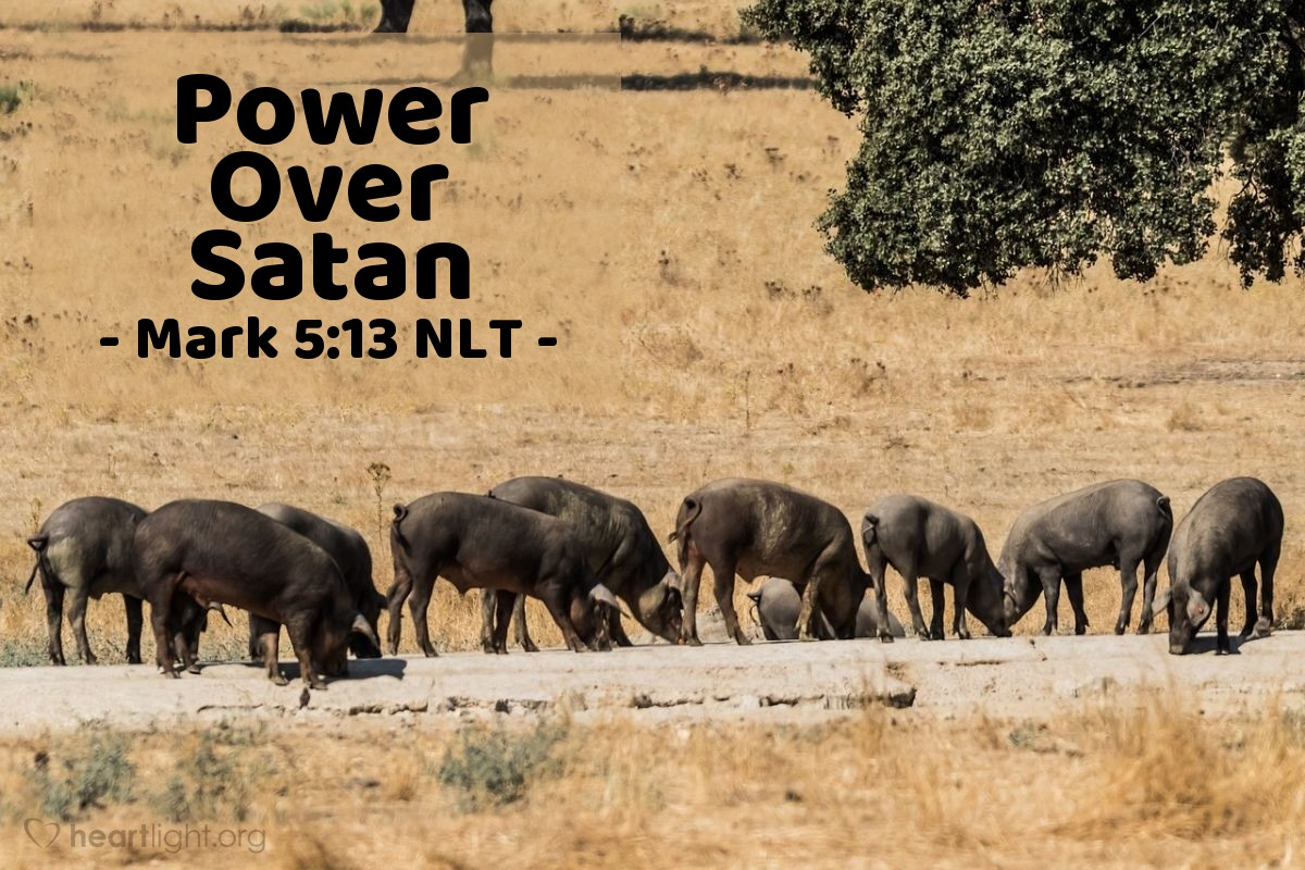 Illustration of Mark 5:13 —  There were about 2,000 pigs in that herd.
