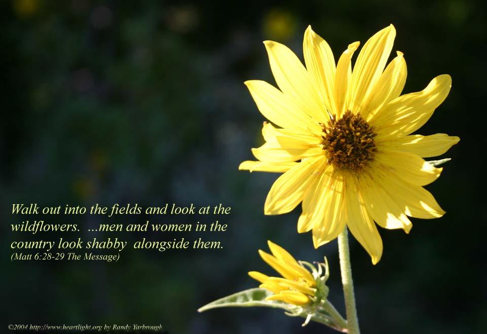 PowerPoint Background using Matthew 6:28-29 Text