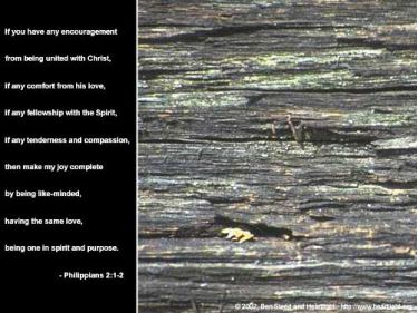 Illustration of the Bible Verse Philippians 2:1-2