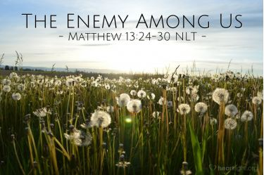 Illustration of the Bible Verse Matthew 13:24-30 NLT