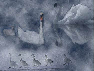 PowerPoint Background: Swans