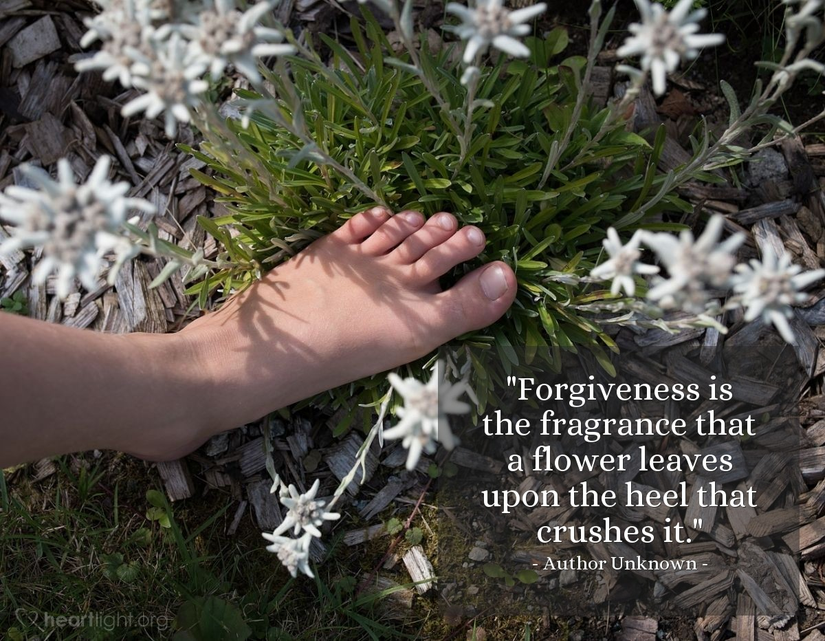 "Illustration of Author Unknown — ""Forgiveness is the fragrance that a flower leaves upon the heel that crushes it."""