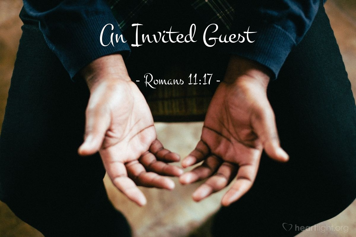 An Invited Guest — Romans 11:17