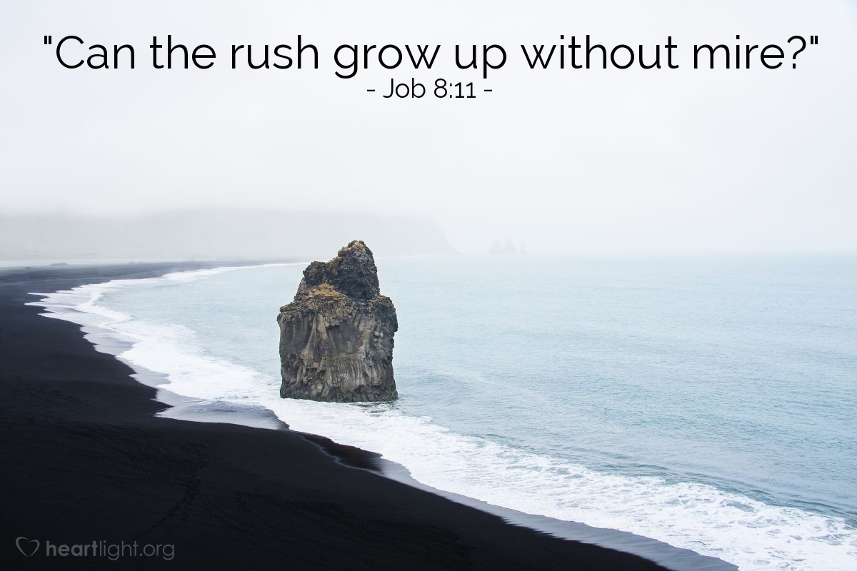 "Illustration of Job 8:11 — ""Can the rush grow up without mire?"""