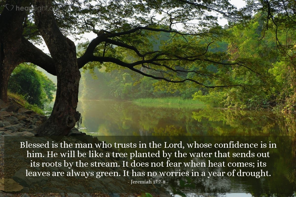 Illustration of Jeremiah 17:7-8 — Blessed is the man who trusts in the Lord, whose confidence is in him. He will be like a tree planted by the water that sends out its roots by the stream. It does not fear when heat comes; its leaves are always green. It has no worries in a year of drought.
