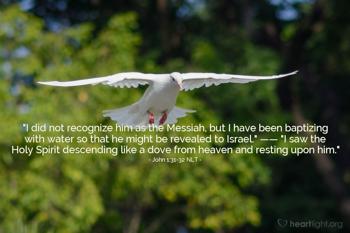 """Illustration of John 1:31-32 NLT — """"I did not recognize [Jesus] as the Messiah, but I have been baptizing with water so that he might be revealed to Israel."""""""