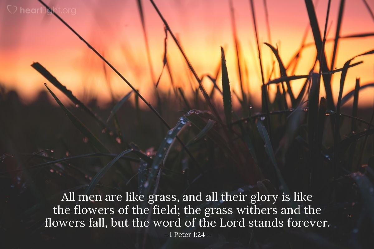 Illustration of 1 Peter 1:24 — All men are like grass, and all their glory is like the flowers of the field; the grass withers and the flowers fall, but the word of the Lord stands forever.