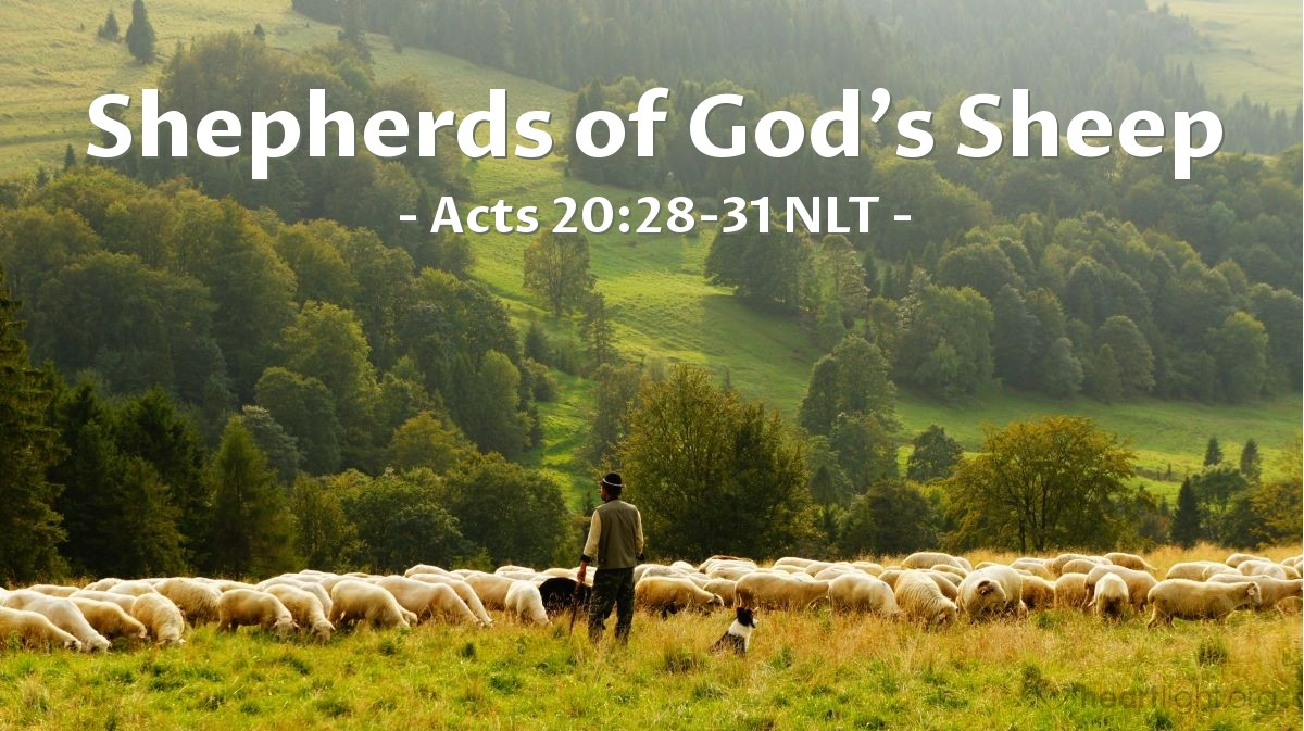 """Illustration of Acts 20:28-31 NLT — [Paul continued his talk to the Ephesian elders, saying,] """"So guard yourselves and God's people. Feed and shepherd God's flock — his church, purchased with his own blood — over which the Holy Spirit has appointed you as leaders. I know that false teachers, like vicious wolves, will come in among you after I leave, not sparing the flock. Even some men from your own group will rise up and distort the truth in order to draw a following. Watch out! Remember the three years I was with you — my constant watch and care over you night and day, and my many tears for you."""""""
