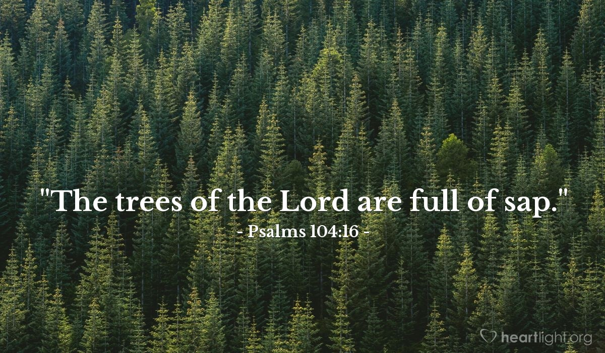 "Illustration of Psalms 104:16 — ""The trees of the Lord are full of sap."""