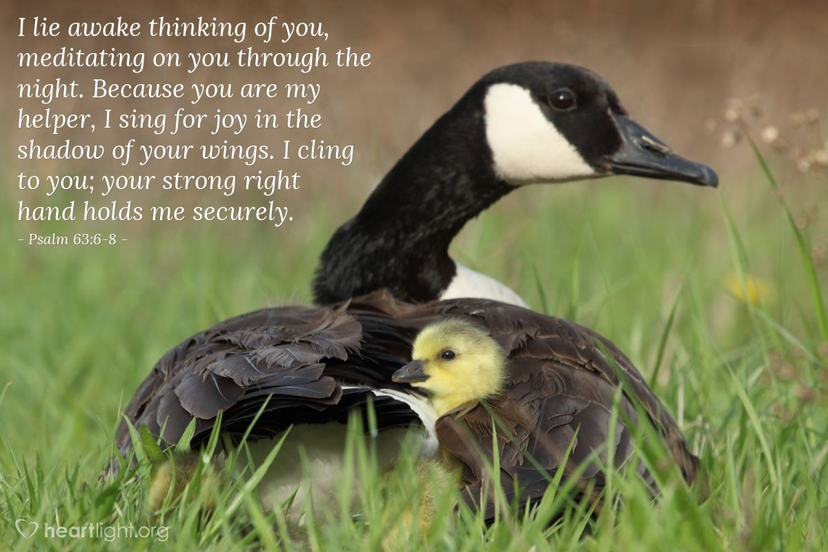 Illustration of Psalm 63:6-8 — I lie awake thinking of you, meditating on you through the night. Because you are my helper, I sing for joy in the shadow of your wings. I cling to you; your strong right hand holds me securely.