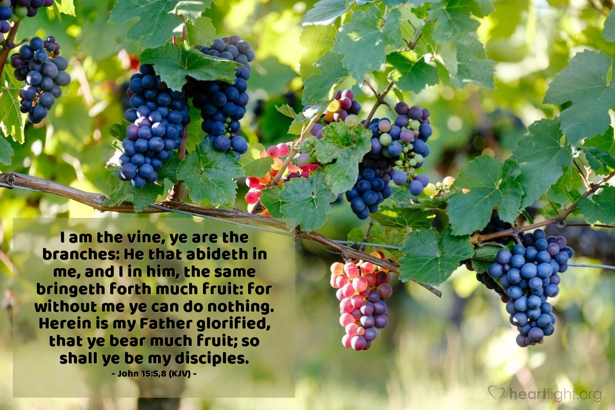 Illustration of John 15:5,8 (KJV) — I am the vine, ye are the branches: He that abideth in me, and I in him, the same bringeth forth much fruit: for without me ye can do nothing. Herein is my Father glorified, that ye bear much fruit; so shall ye be my disciples.