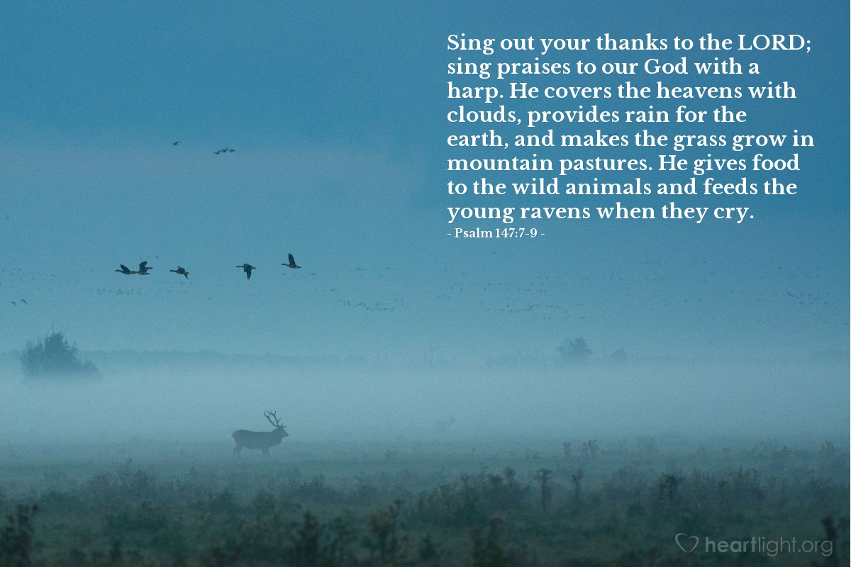 Illustration of Psalm 147:7-9 — Sing out your thanks to the LORD; sing praises to our God with a harp. He covers the heavens with clouds, provides rain for the earth, and makes the grass grow in mountain pastures. He gives food to the wild animals and feeds the young ravens when they cry.