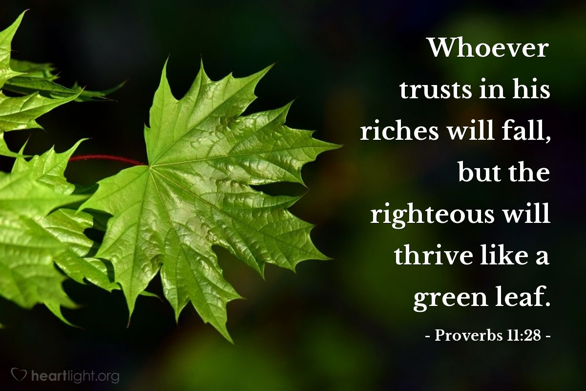 Illustration of Proverbs 11:28 — Whoever trusts in his riches will fall, but the righteous will thrive like a green leaf.