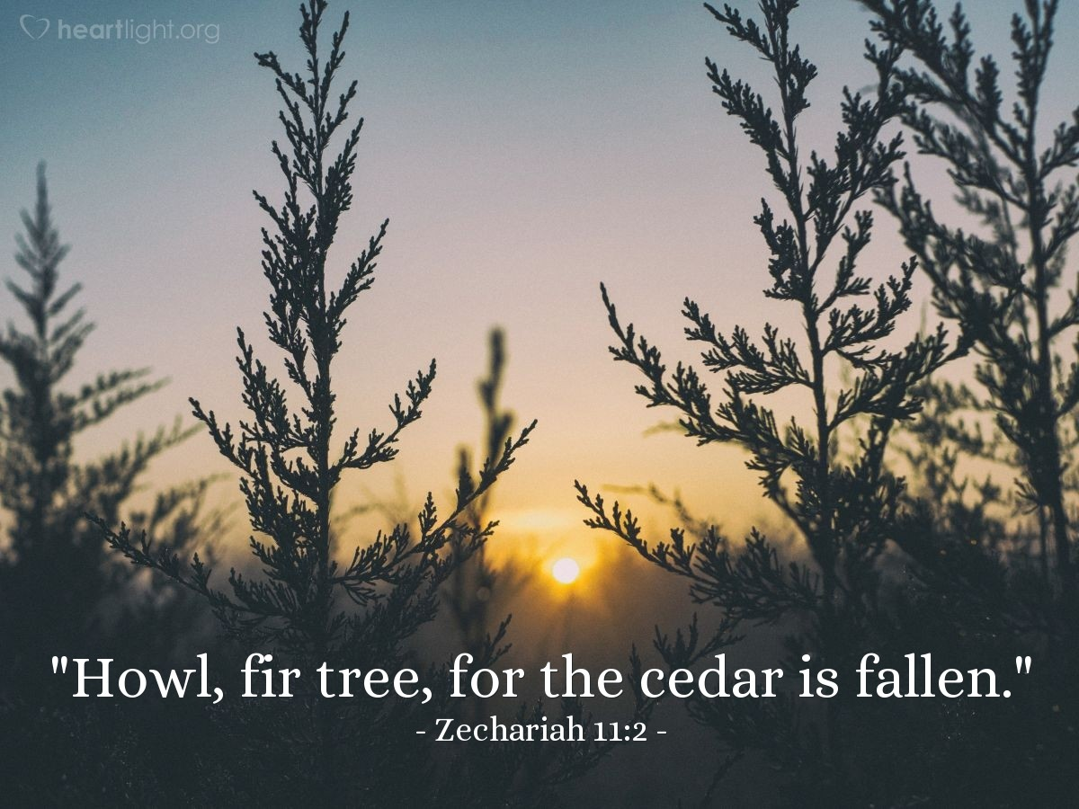 "Illustration of Zechariah 11:2 — ""Howl, fir tree, for the cedar is fallen."""