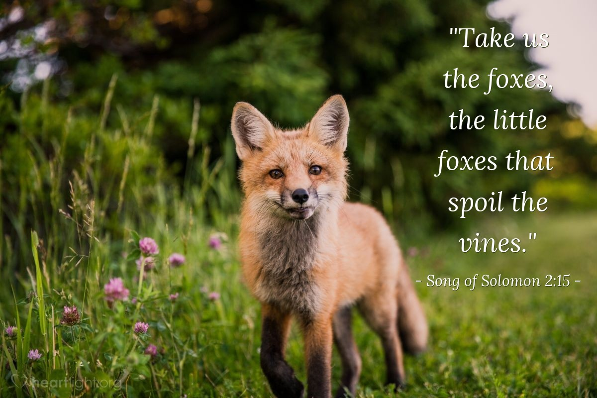 "Illustration of Song of Solomon 2:15 — ""Take us the foxes, the little foxes that spoil the vines."""
