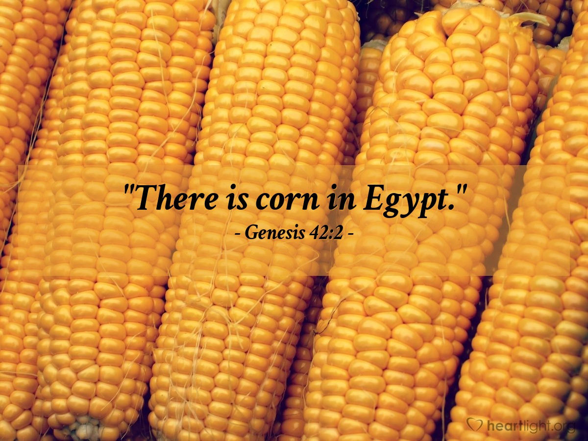 "Illustration of Genesis 42:2 — ""There is corn in Egypt."""