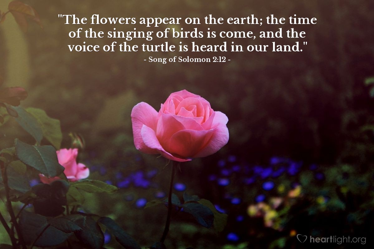 "Illustration of Song of Solomon 2:12 — ""The flowers appear on the earth; the time of the singing of birds is come, and the voice of the turtle is heard in our land."""