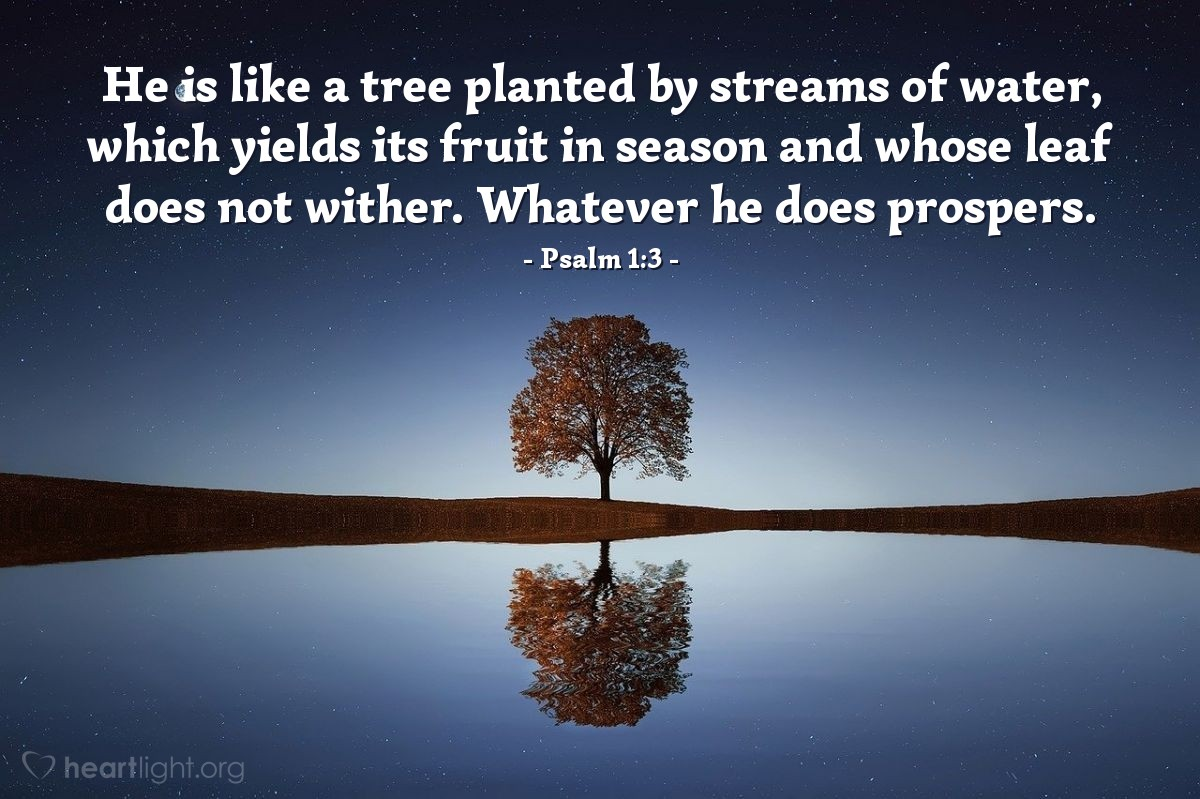 Illustration of Psalm 1:3 — He is like a tree planted by streams of water, which yields its fruit in season and whose leaf does not wither. Whatever he does prospers.