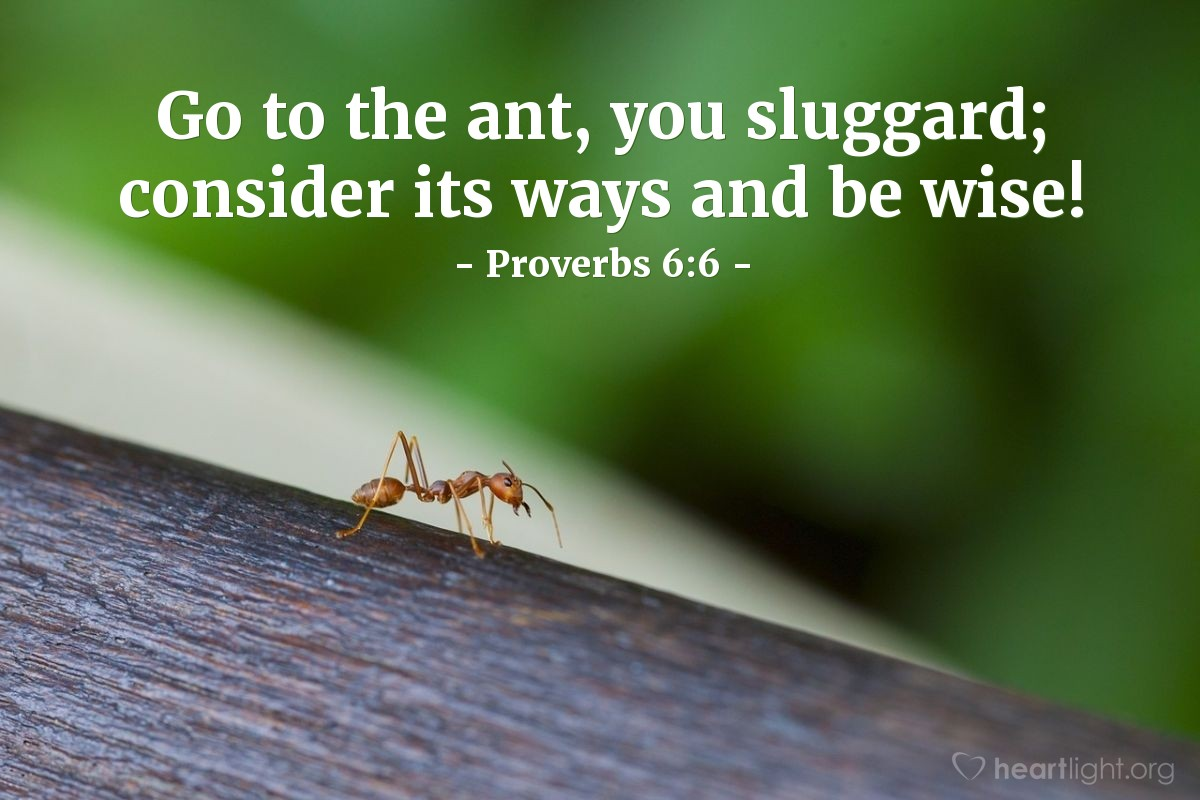 Illustration of Proverbs 6:6 — Go to the ant, you sluggard; consider its ways and be wise!