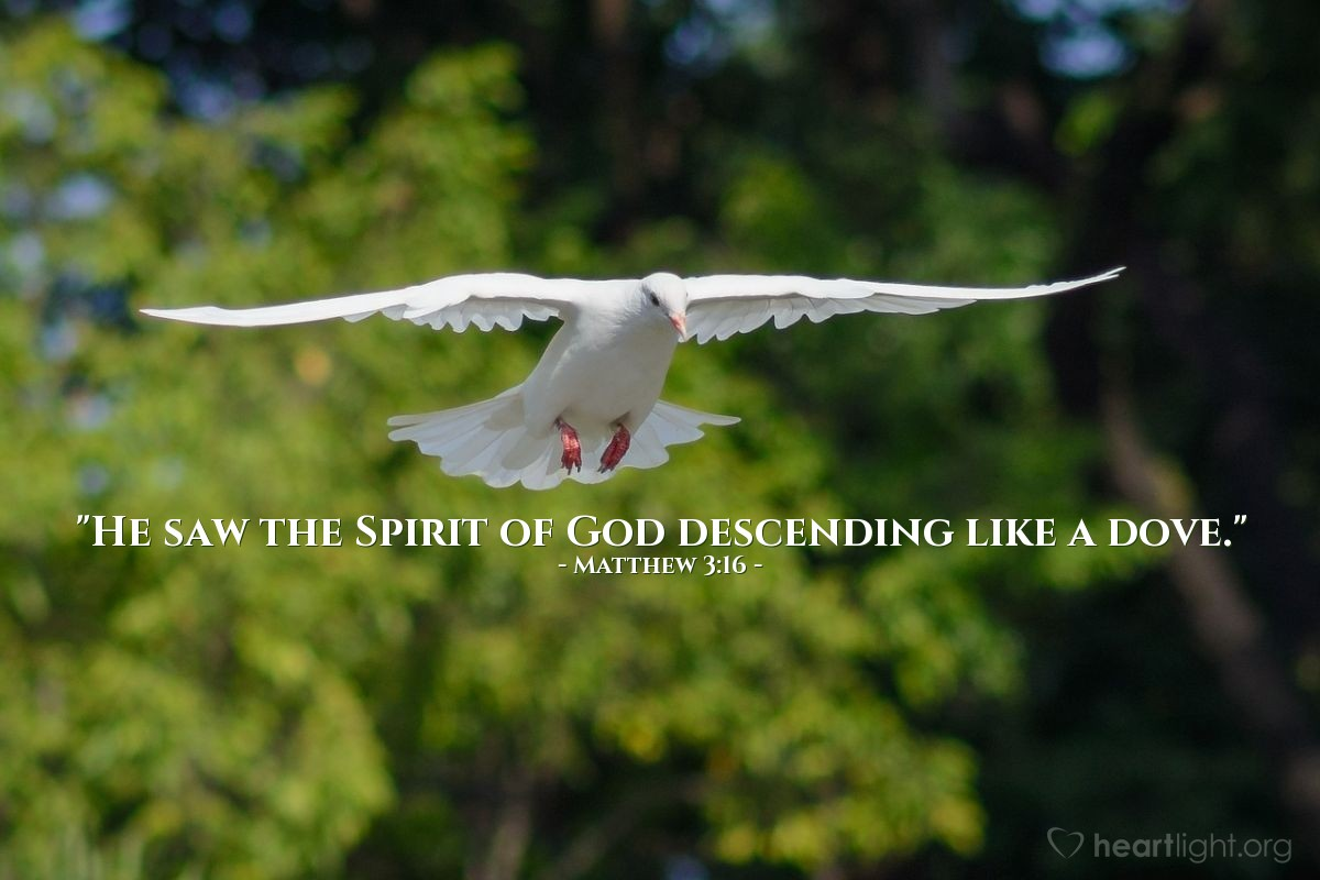 "Illustration of Matthew 3:16 — ""He saw the Spirit of God descending like a dove."""