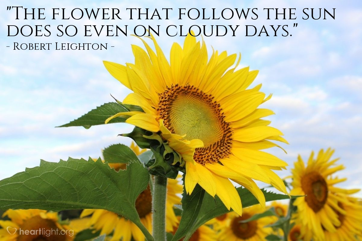 """Illustration of Robert Leighton — """"The flower that follows the sun does so even on cloudy days."""""""