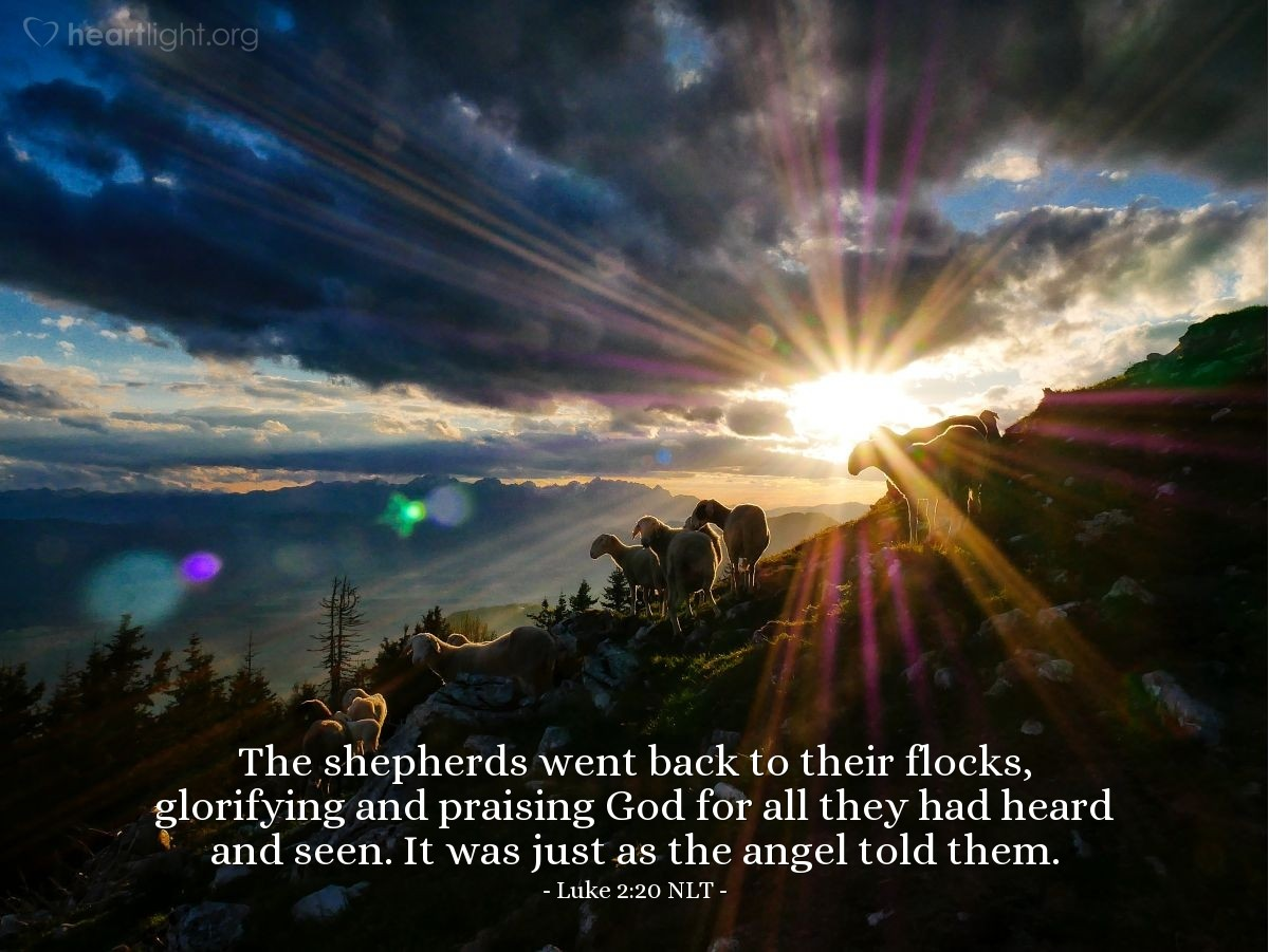 Illustration of Luke 2:20 NLT — The shepherds went back to their flocks, glorifying and praising God for all they had heard and seen. It was just as the angel told them.