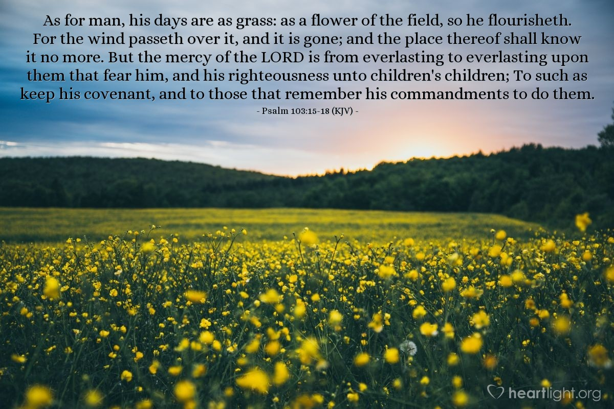 Illustration of Psalm 103:15-18 (KJV) — As for man, his days are as grass: as a flower of the field, so he flourisheth.  For the wind passeth over it, and it is gone; and the place thereof shall know it no more.  But the mercy of the LORD is from everlasting to everlasting upon them that fear him, and his righteousness unto children's children;  To such as keep his covenant, and to those that remember his commandments to do them.