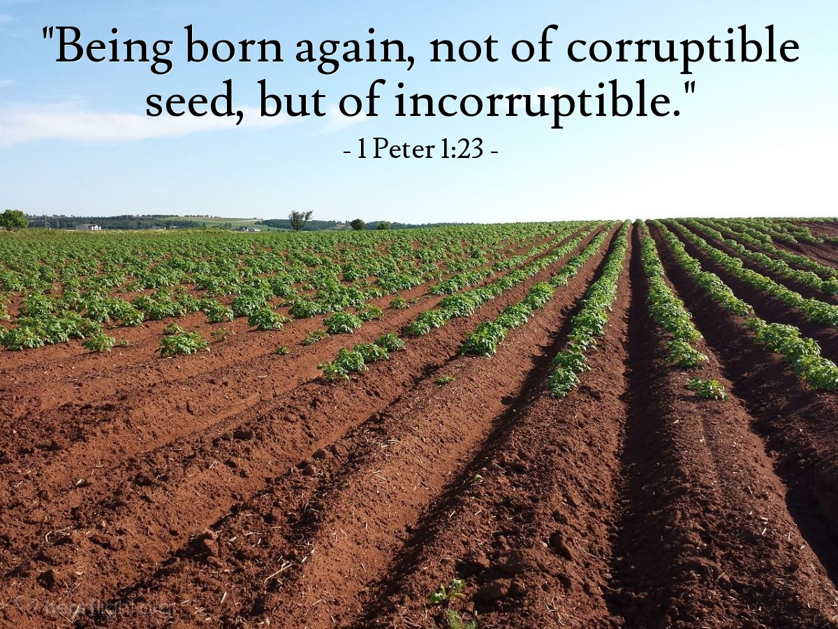 "Illustration of 1 Peter 1:23 — ""Being born again, not of corruptible seed, but of incorruptible."""
