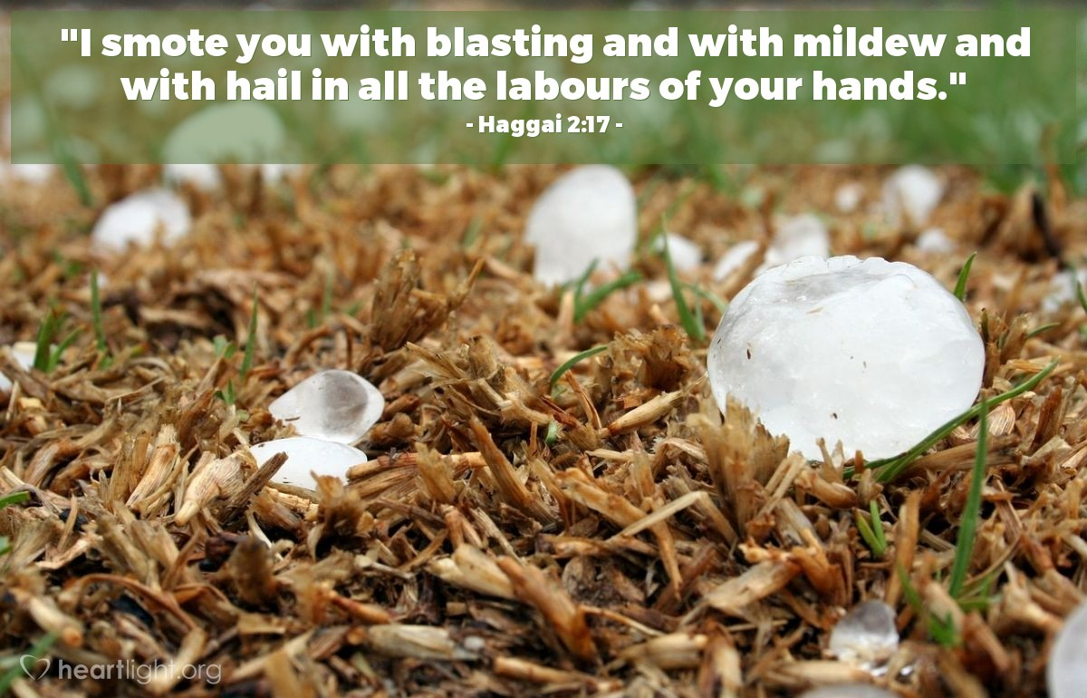 "Illustration of Haggai 2:17 — ""I smote you with blasting and with mildew and with hail in all the labours of your hands."""