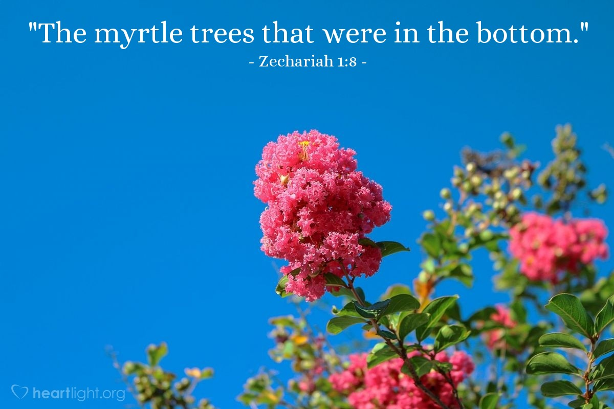 "Illustration of Zechariah 1:8 — ""The myrtle trees that were in the bottom."""