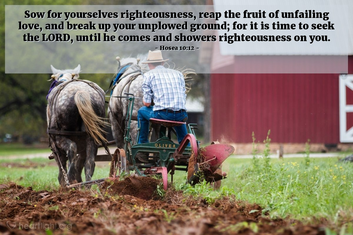 Illustration of Hosea 10:12 — Sow for yourselves righteousness, reap the fruit of unfailing love, and break up your unplowed ground; for it is time to seek the LORD, until he comes and showers righteousness on you.