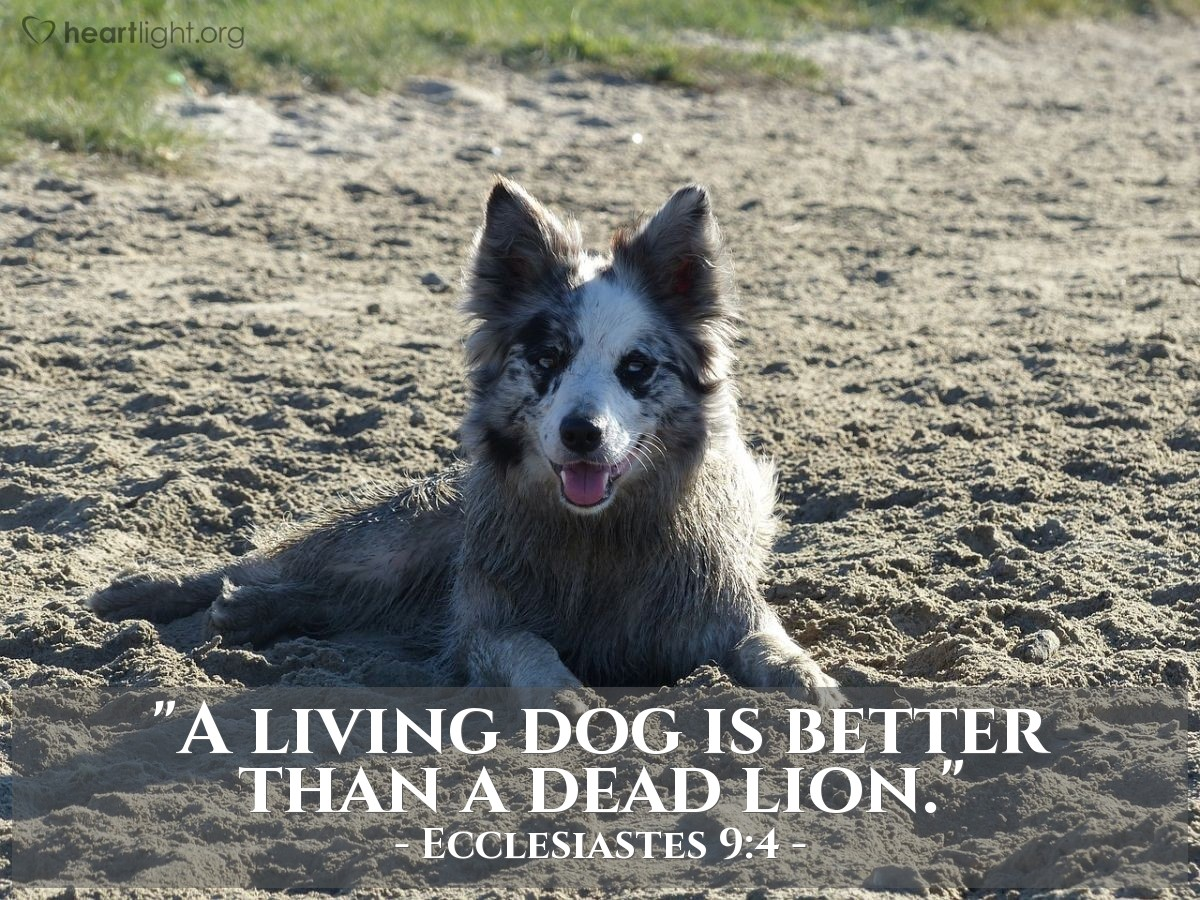 """Illustration of Ecclesiastes 9:4 — """"A living dog is better than a dead lion."""""""