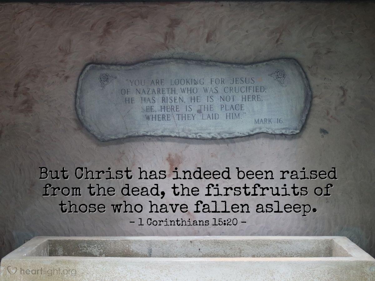 Illustration of 1 Corinthians 15:20 — But Christ has indeed been raised from the dead, the firstfruits of those who have fallen asleep.