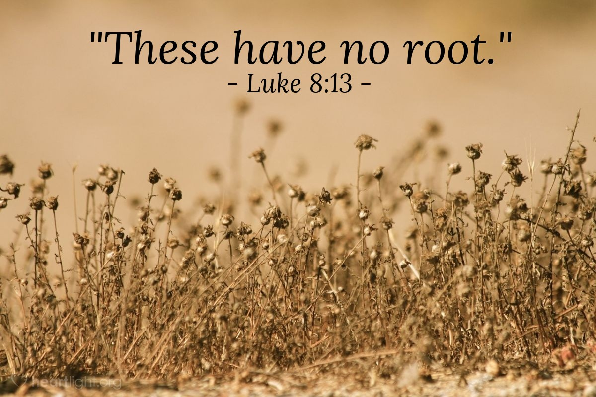 "Illustration of Luke 8:13 — ""These have no root."""