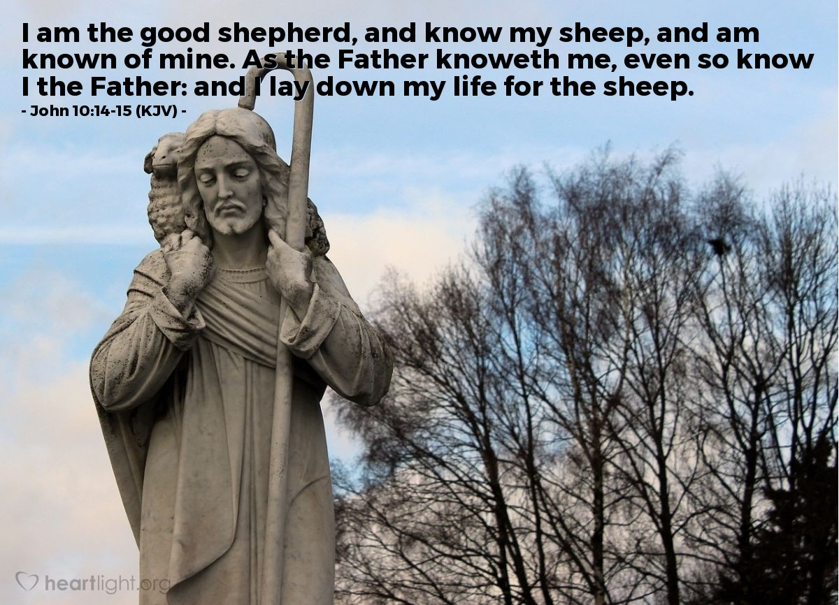 Illustration of John 10:14-15 (KJV) — I am the good shepherd, and know my sheep, and am known of mine. As the Father knoweth me, even so know I the Father: and I lay down my life for the sheep.