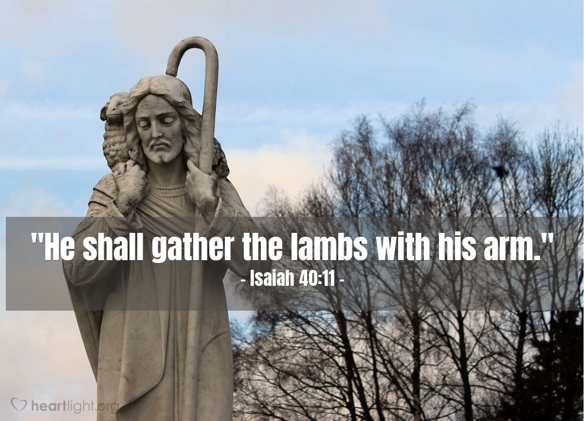 "Illustration of Isaiah 40:11 — ""He shall gather the lambs with his arm."""