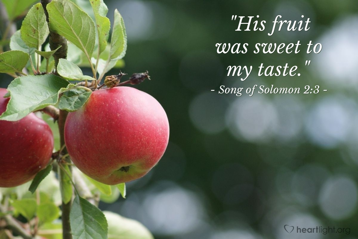 "Illustration of Song of Solomon 2:3 — ""His fruit was sweet to my taste."""