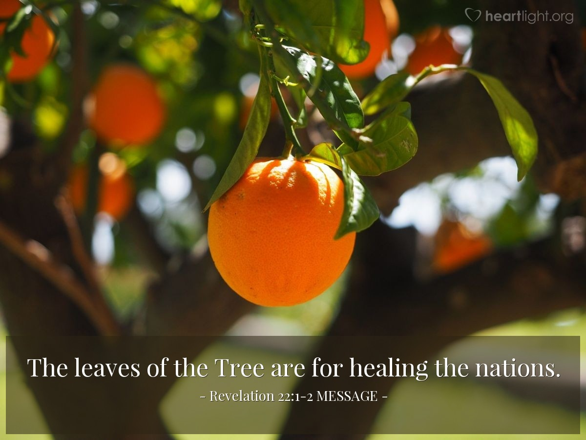 Illustration of Revelation 22:1-2 MESSAGE —  The leaves of the Tree are for healing the nations.
