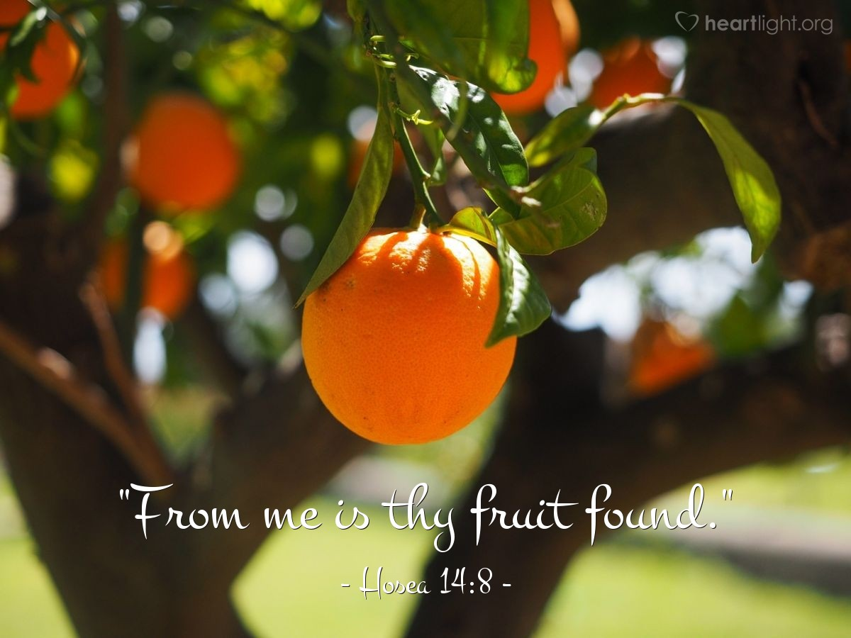 "Illustration of Hosea 14:8 — ""From me is thy fruit found."""
